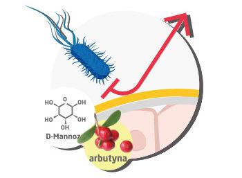 D-mannoza na zapalenie pęcherza
